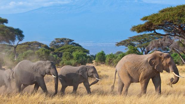 De viaje en África
