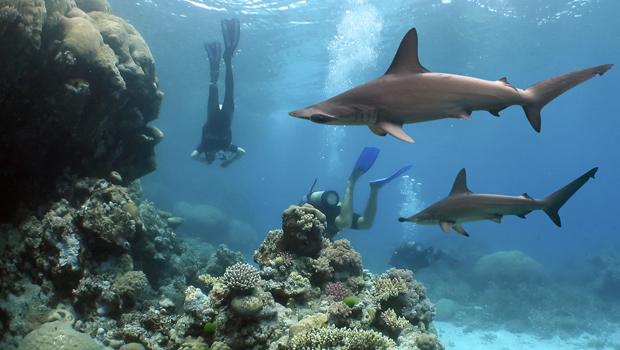 lugares para bucear  Submarinismo Australia