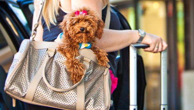 de vacaciones con tu mascota