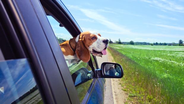 Viajes en coche