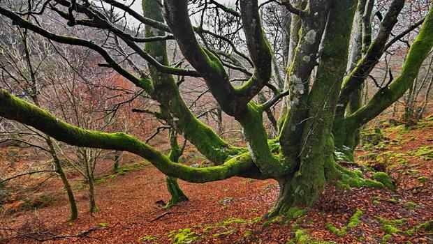 Bosques de Navarrra