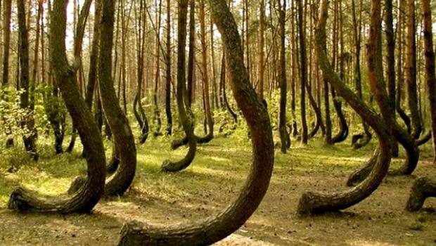 Bosque en transilvania
