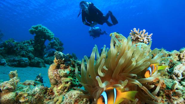 Submarinismo Mar Rojo