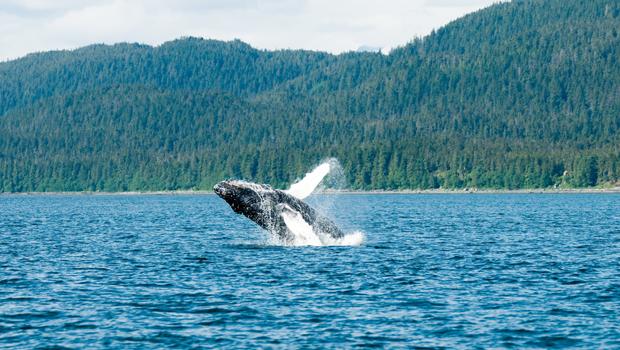 Ballenas ern Canadá