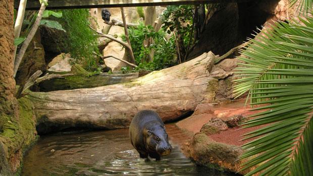 biopar hipopotamo