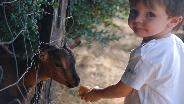 Niño Granja-escuela Fuente Alberche