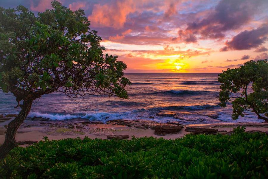 Costa de Oahu