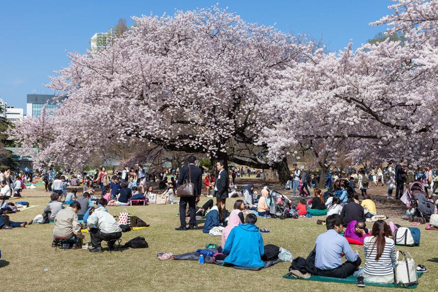 Japoneses celebrando el Hanami en Tokio, Japón. Foto: Piti Sirisriro / Shutterstock.com