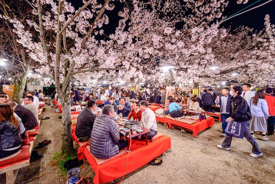 Hanami durante la noche en Parque Maruyama, Kioto. Foto : Sean Pavone / Shutterstock.com