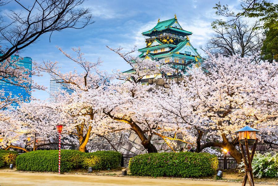 El castillo de Osaka custodiado por los cerezos en flor.