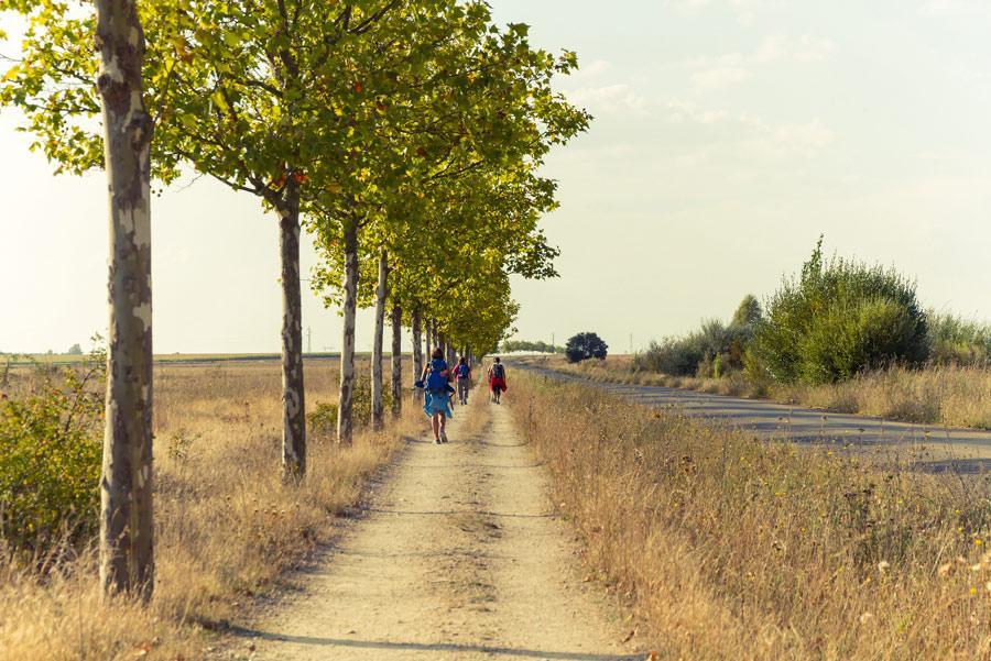 Camino de Santiago, España