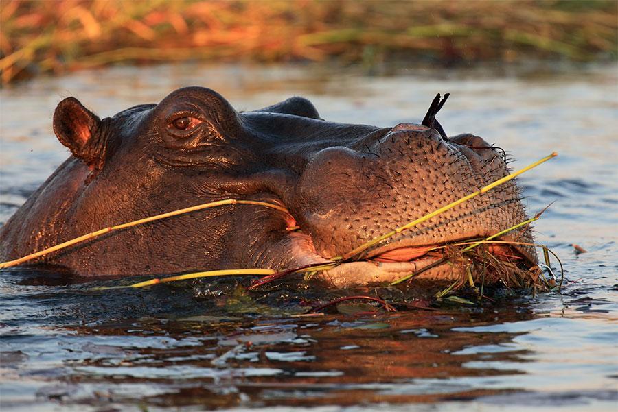 Reserva-natural-Selous,-Tanzania