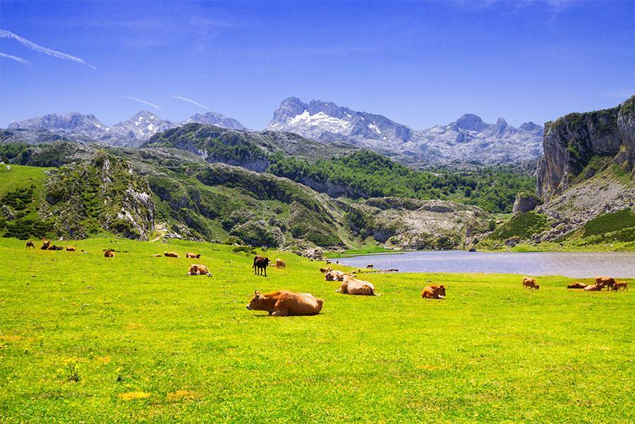Lago Ercina, Asturias.
