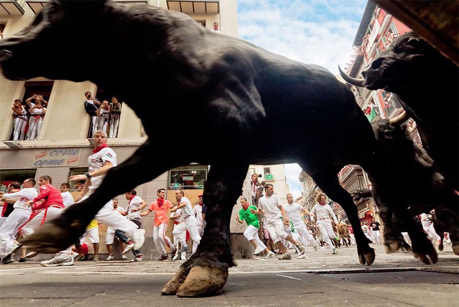 Toros corriendo el encierro. Migel / Shutterstock.com