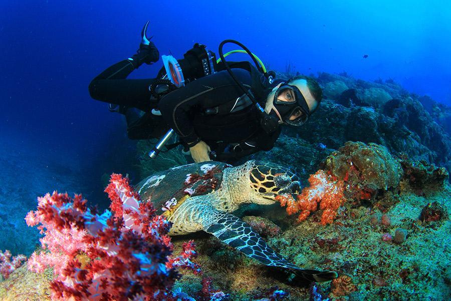 Buceo entre tortugas en Malasia.