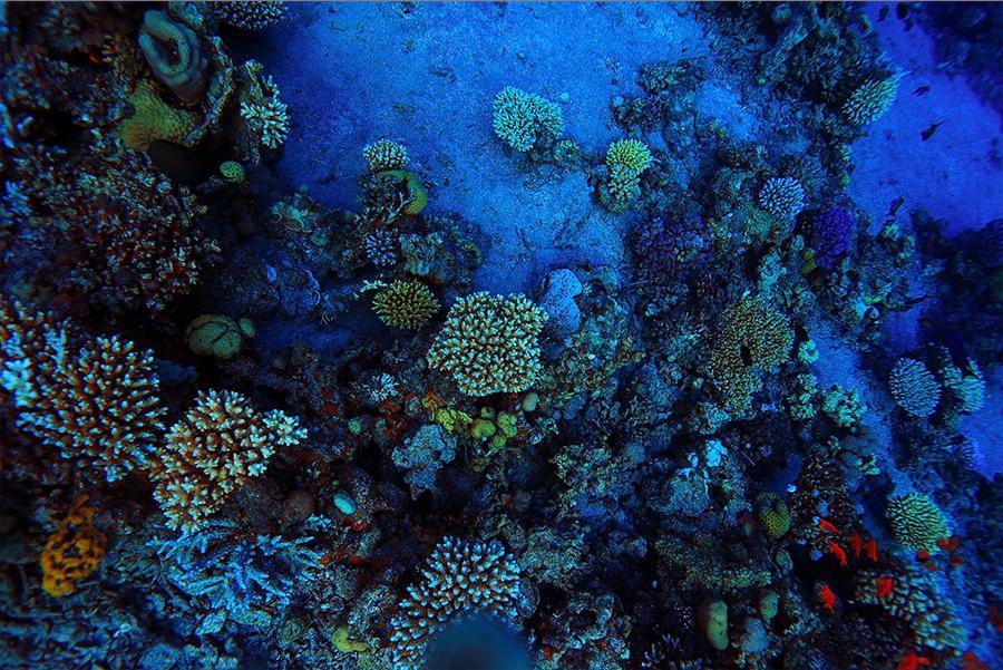 Arrecifes de coral en la costa de Cozumel