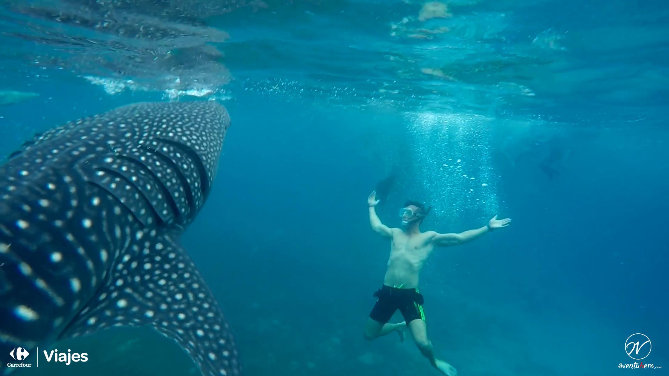 Aventuhero Cebu Tiburon Ballena 2