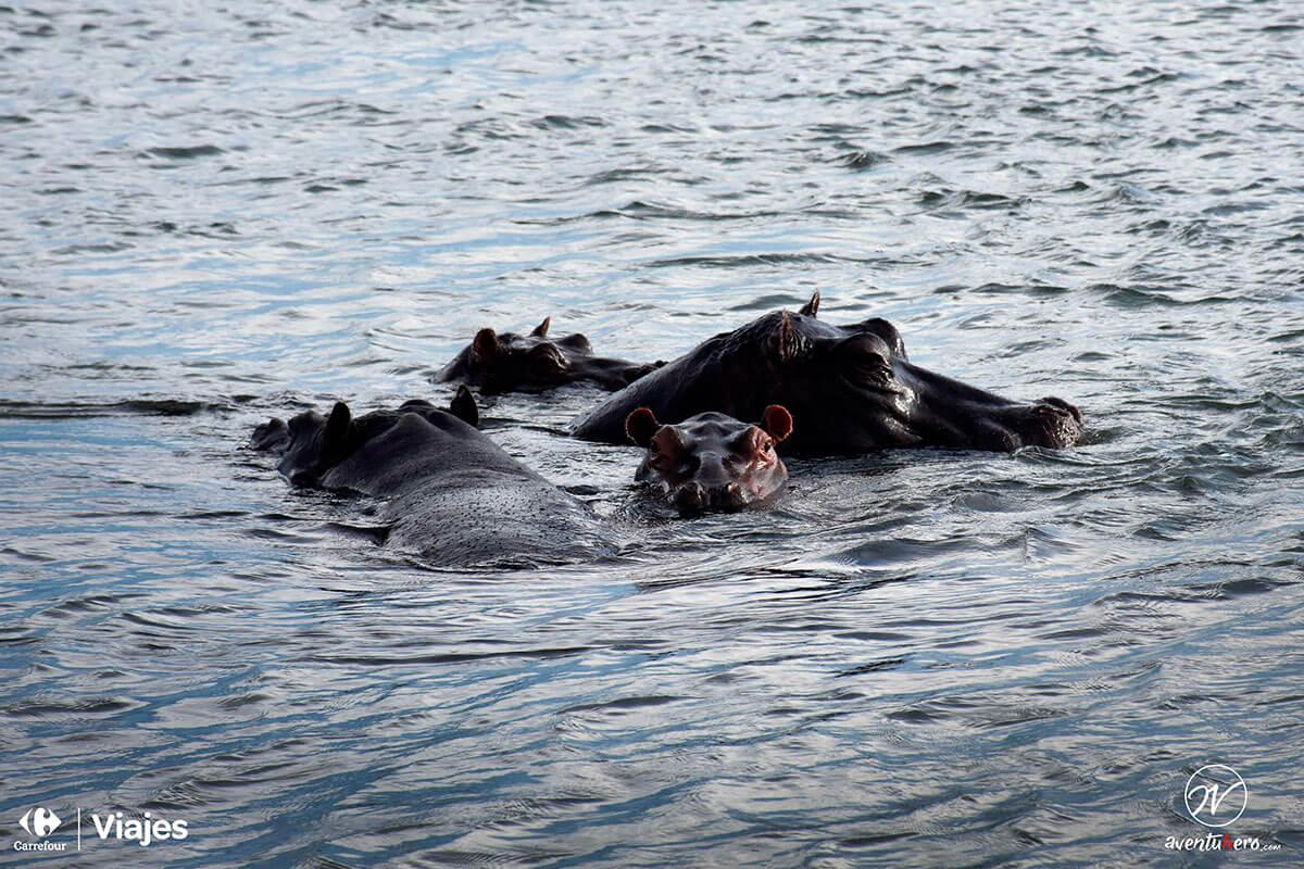 Aventuhero, Hipopótamos Devil`s Pool