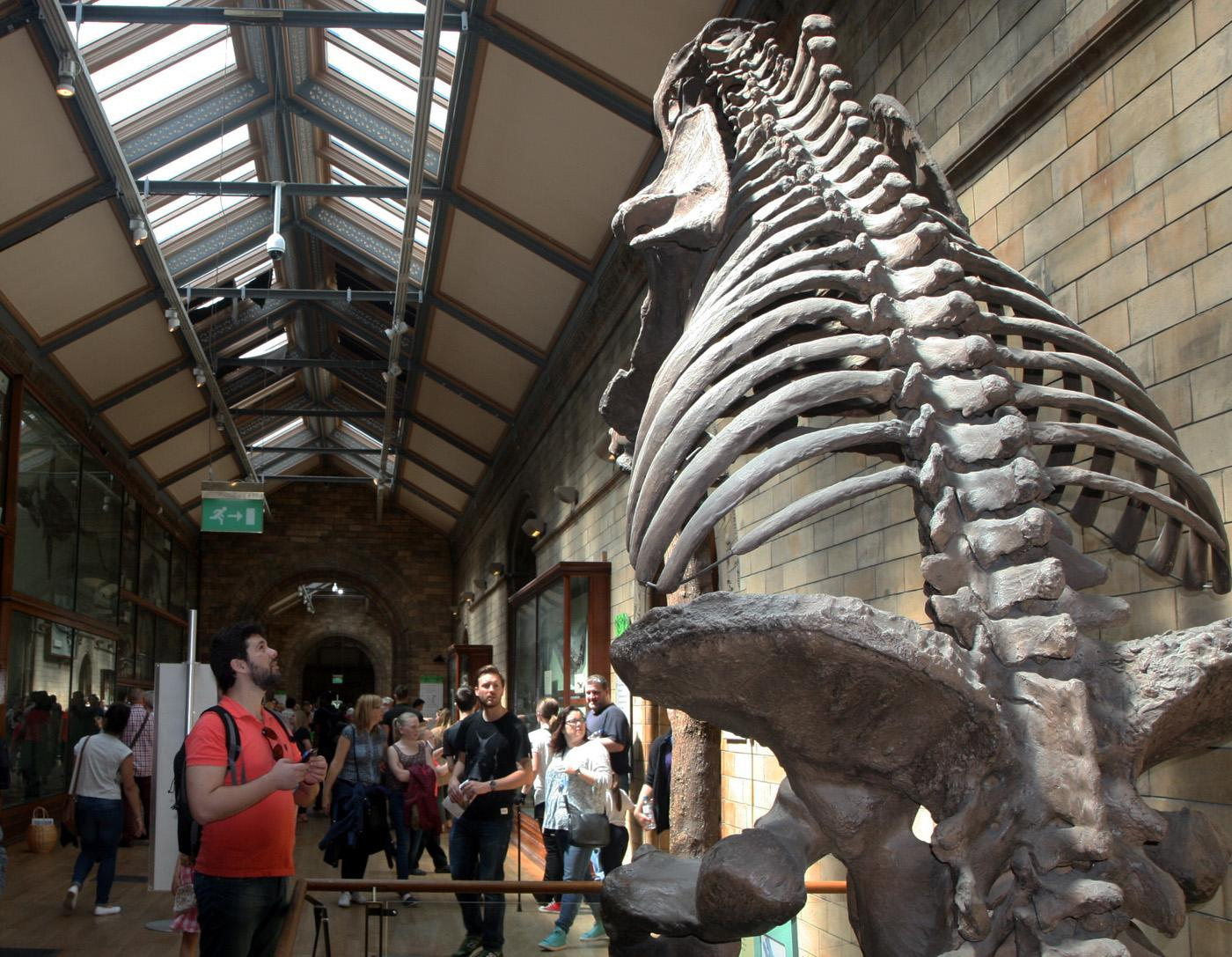 Londres, Museo Historia Natural
