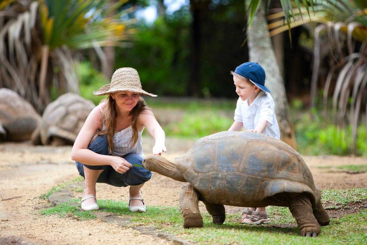 Tortugas en Islas Mauricio