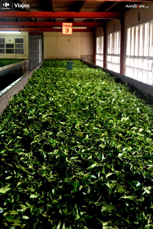 Aventuhero - Fábrica de té Sri Lanka