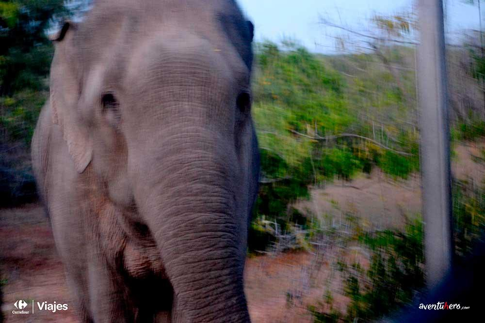 Aventuhero - La sorpresa en forma de elefante en Sri Lanka