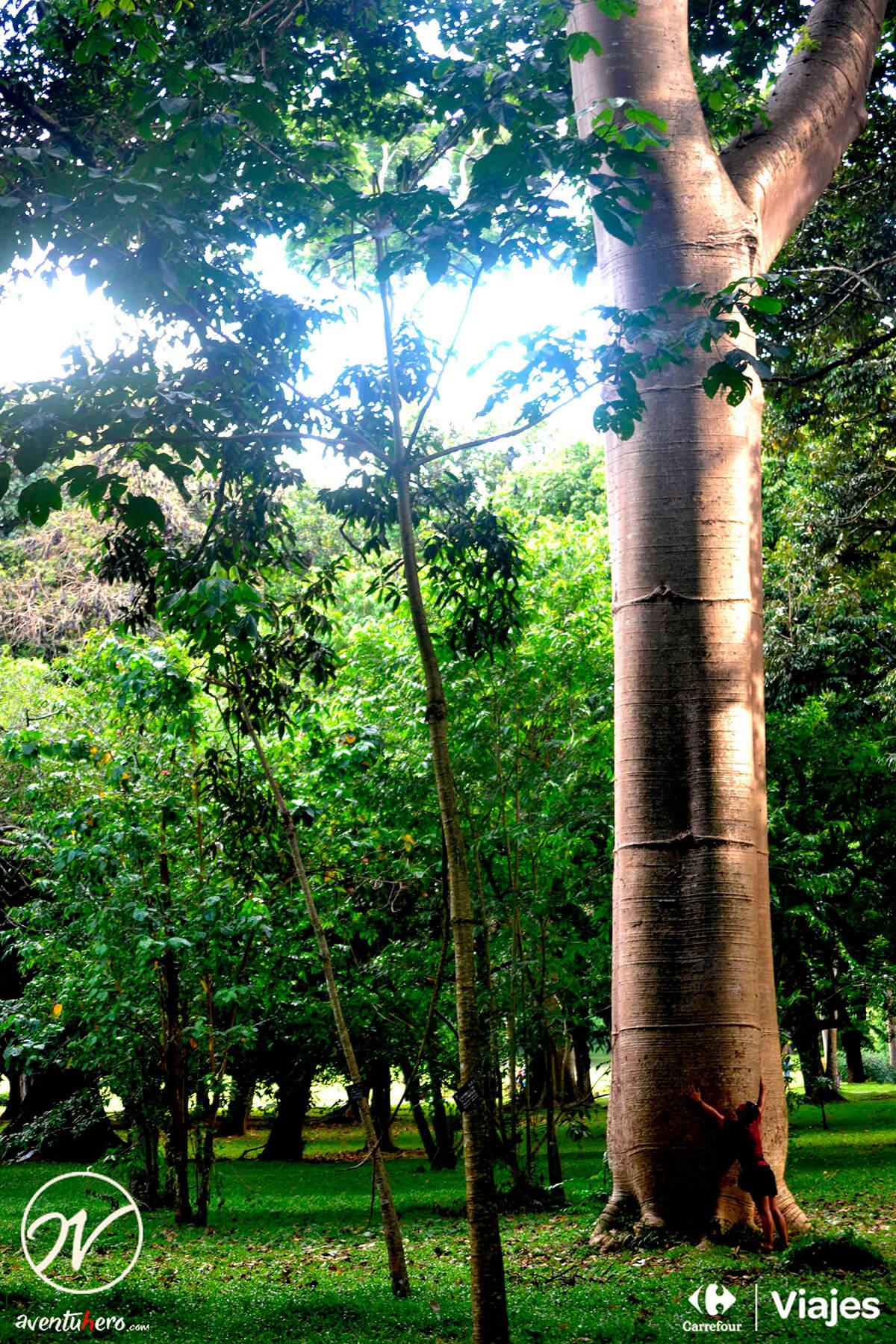 Aventuhero, Viaje Sri Lanka - Arbolazos de Peradeniya