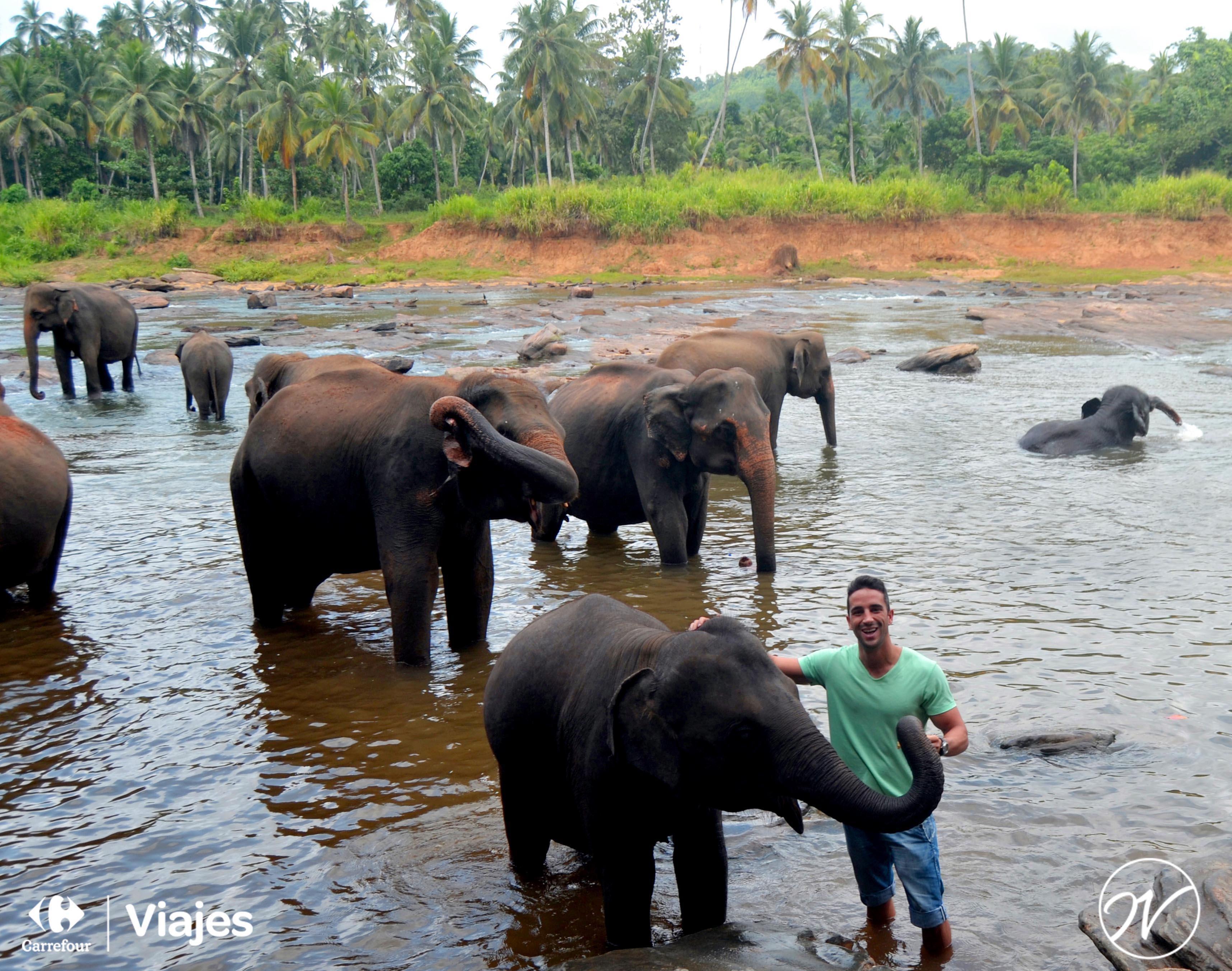 Aventuhero, Sri Lanka - Bañando a los elefantes en el Orfanato de elefantes