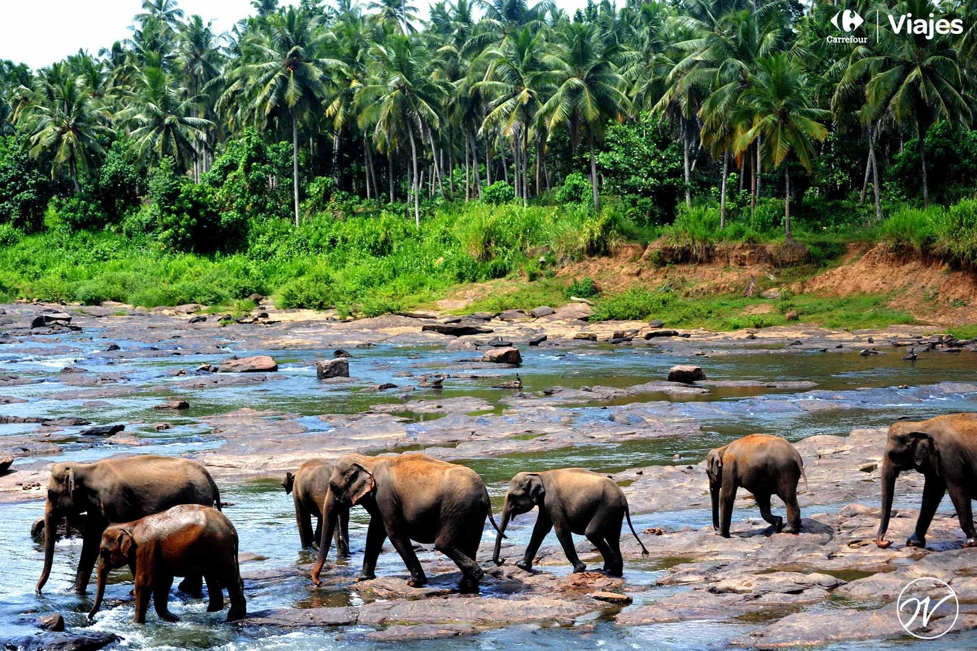 Aventuhero, Viaje a Sri Lanka - Orfanato de elefantes
