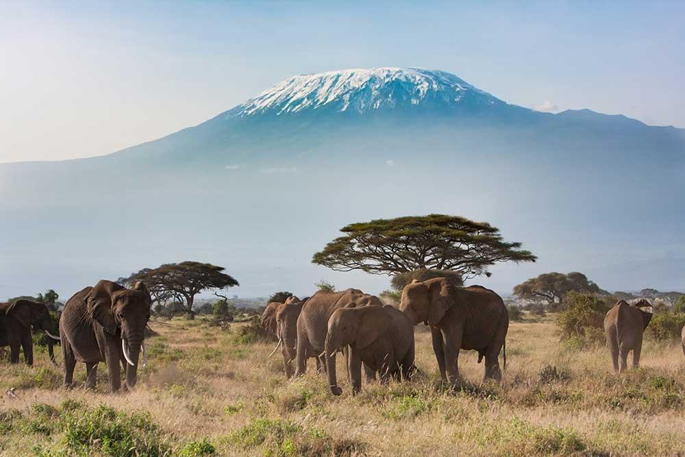 Serengueti Tanzania