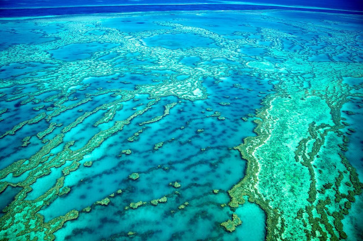 Viaje a Australia, Barrera de Coral Portada