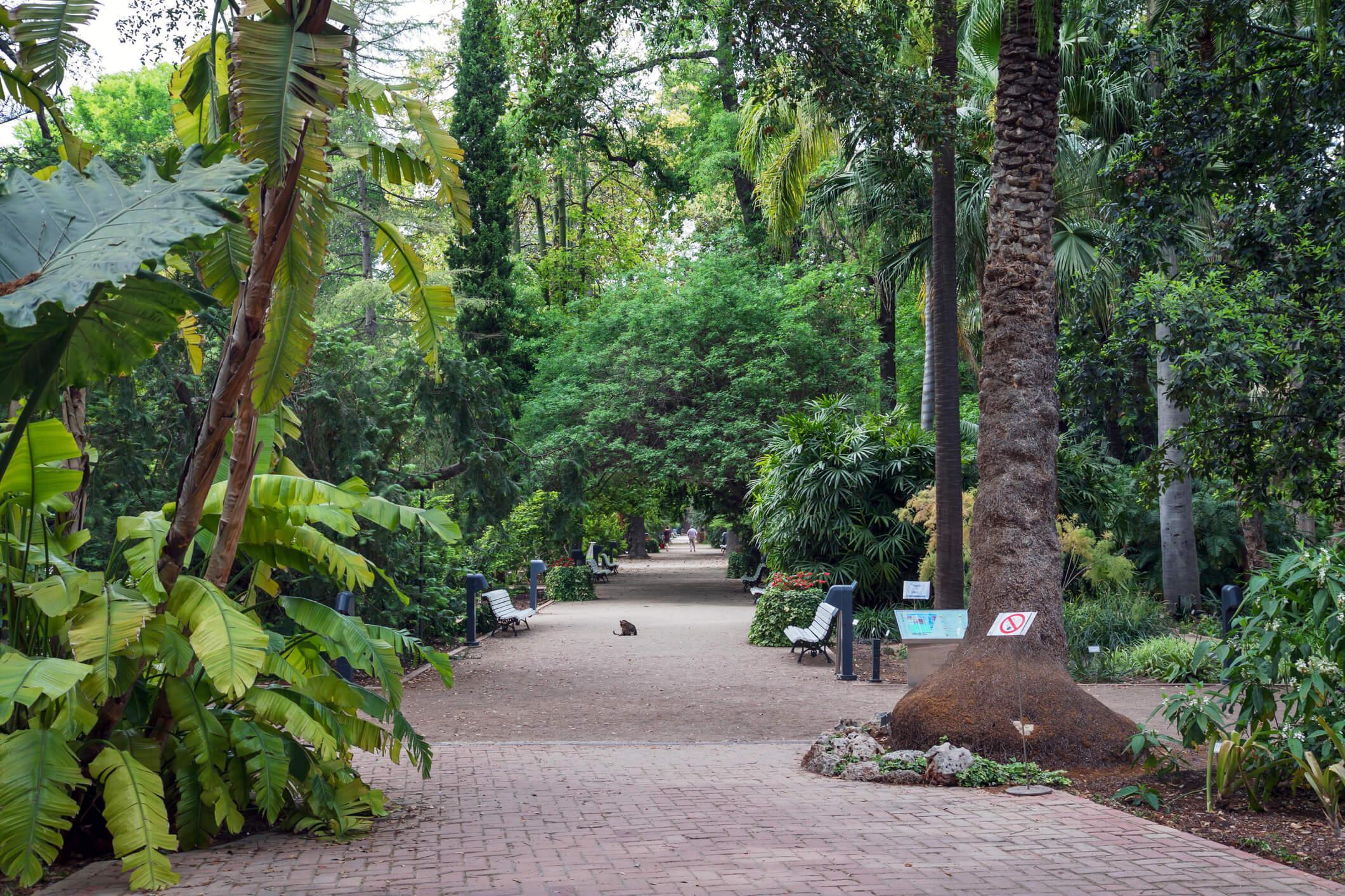 Escapada a Valencia, Jardin botanico