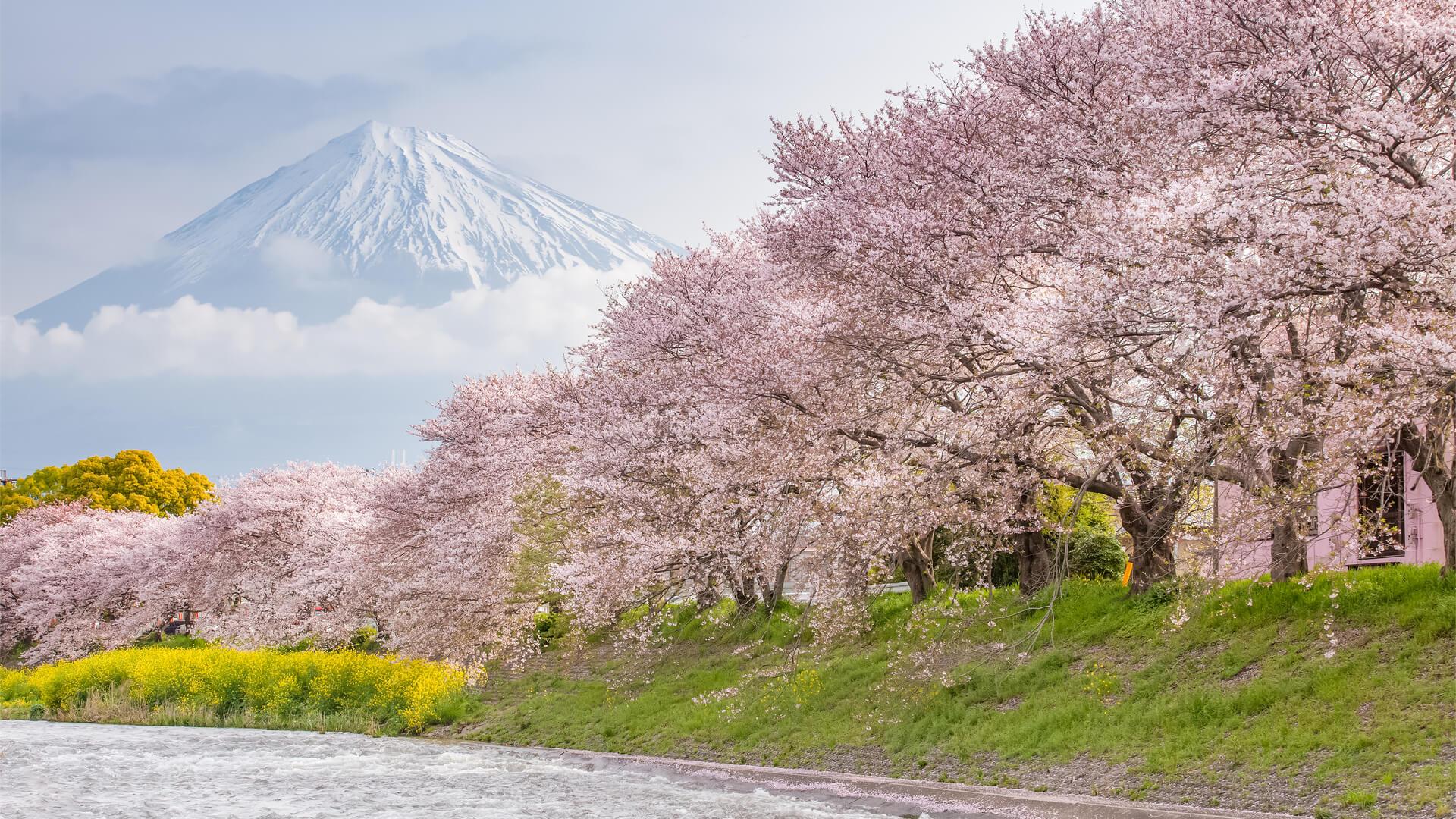 viajar a Japón, Monte Fuji