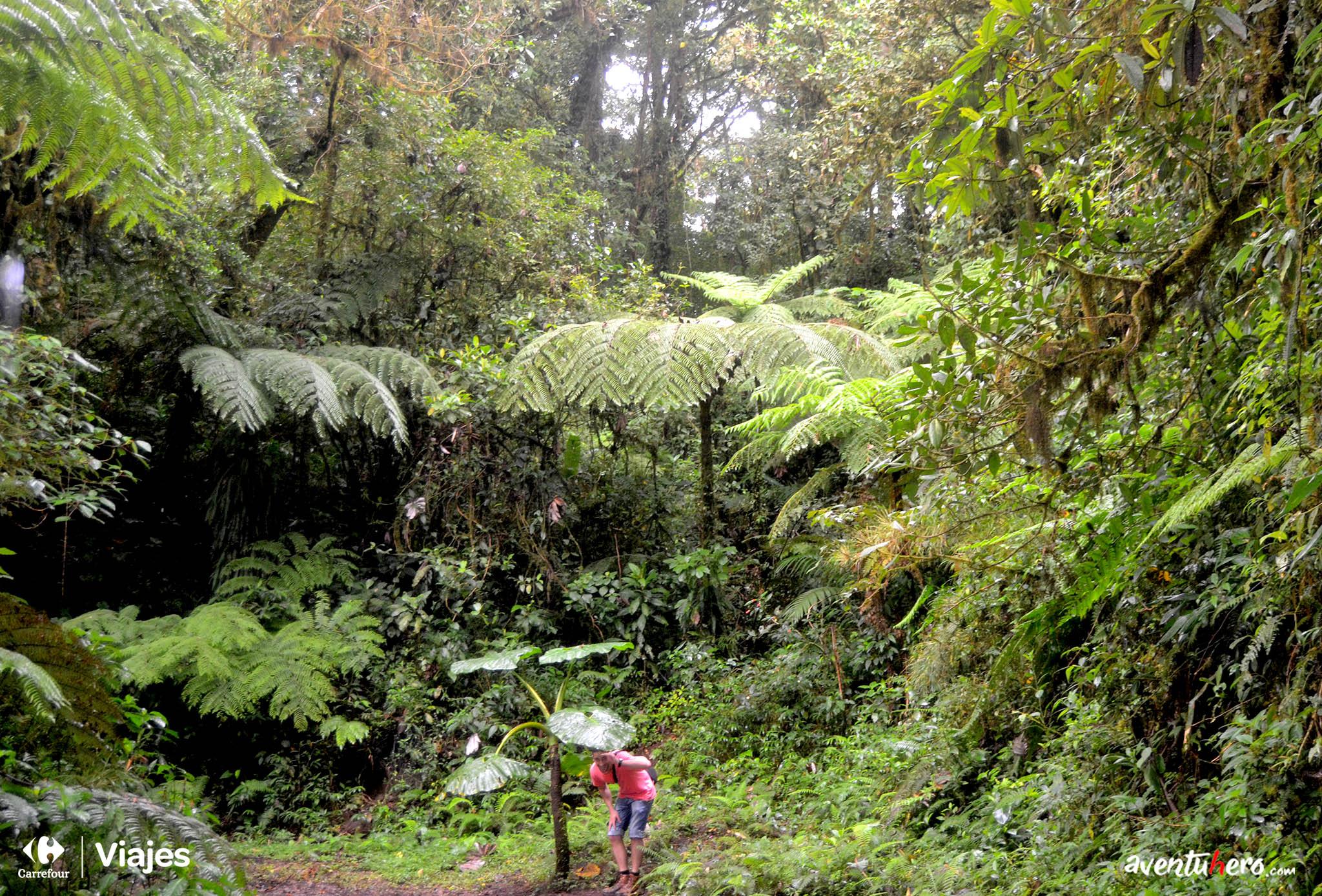 Costa Rica - Monteverde, escenario perfecto de Jurassic Park