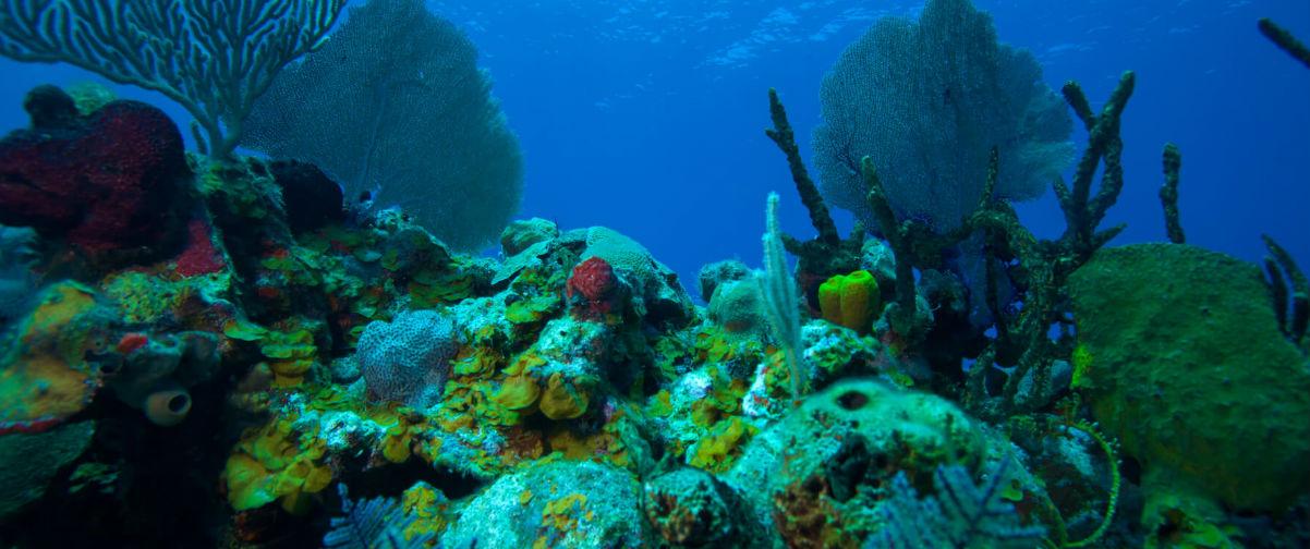 viaje de novios nueva york, Coral Cayo Largo