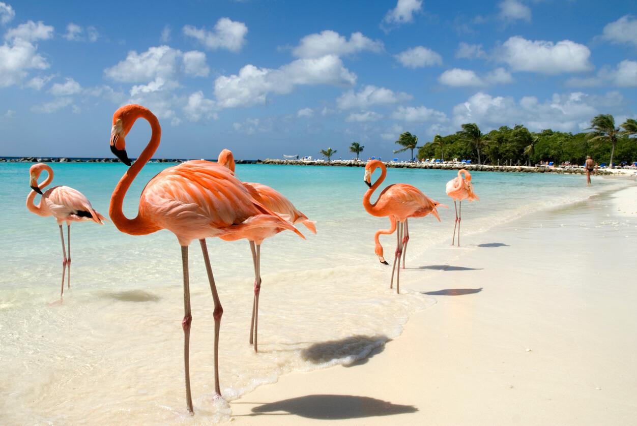 playas del caribe, Playa de Aruba
