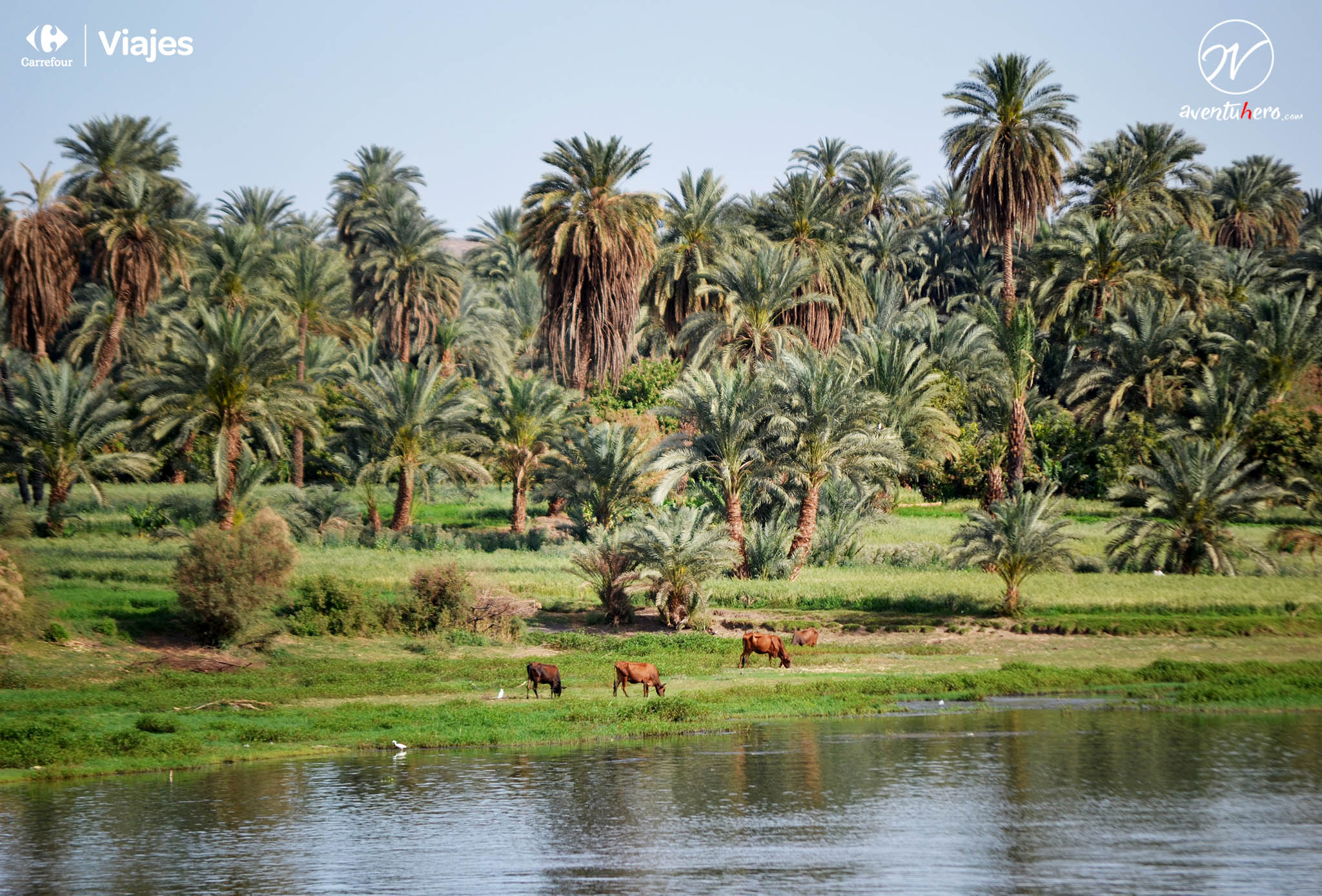 TIPS para viajar a EGIPTO - Rivera del Nilo