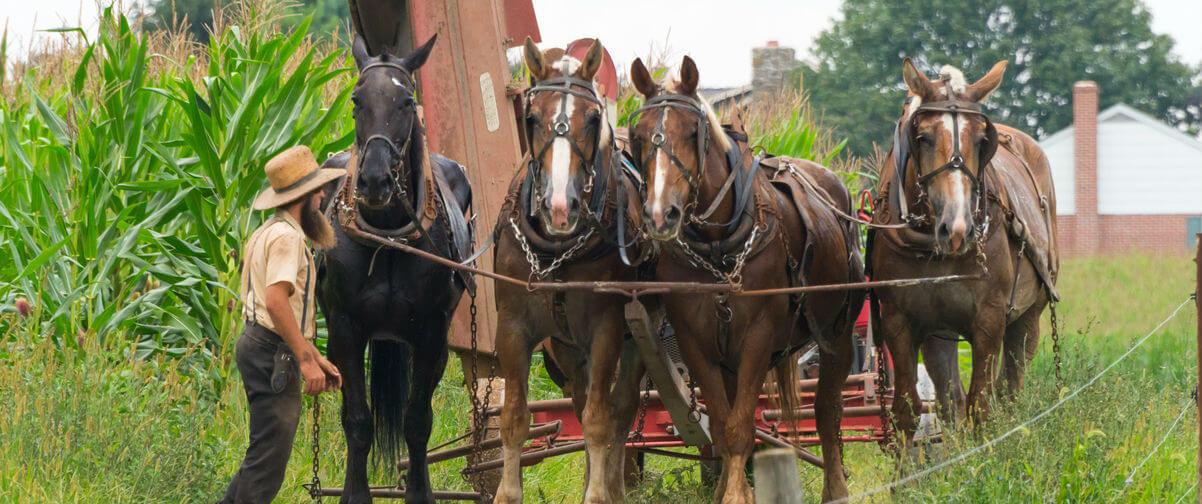 viaje a Filadelfia, Amish trabajando en el campo