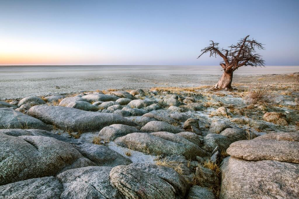 vuelos a Botswana, Baobab solitario