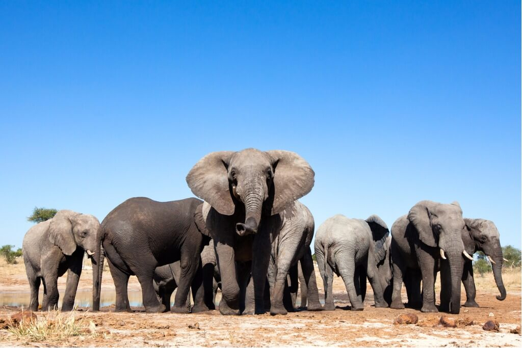 vuelos a Botswana, Elefantes en Parque Nacional de Chobe