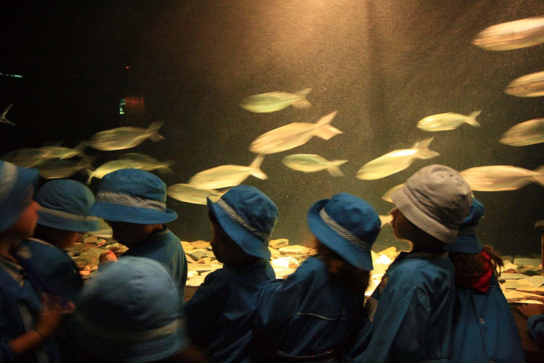 Lisboa acuario