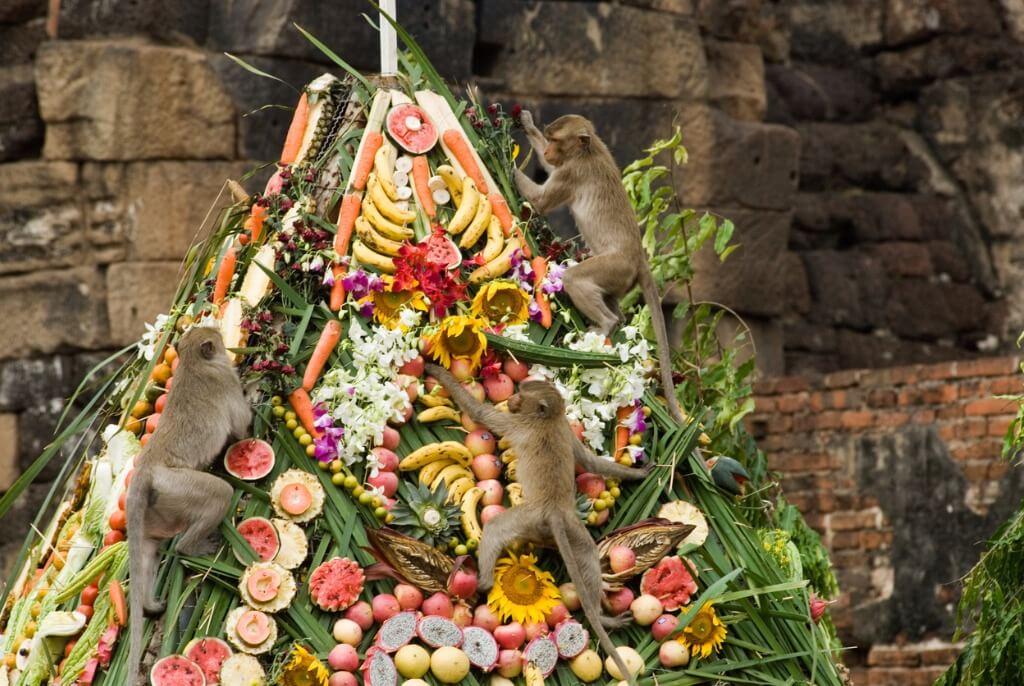 Festival de los Monos, Monos en un buffet