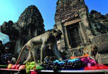 Festival de los Monos, Monos en Lopburi