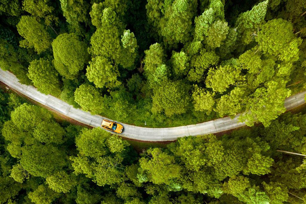 Ruta en coche por Europa, Coche recorriendo bosque