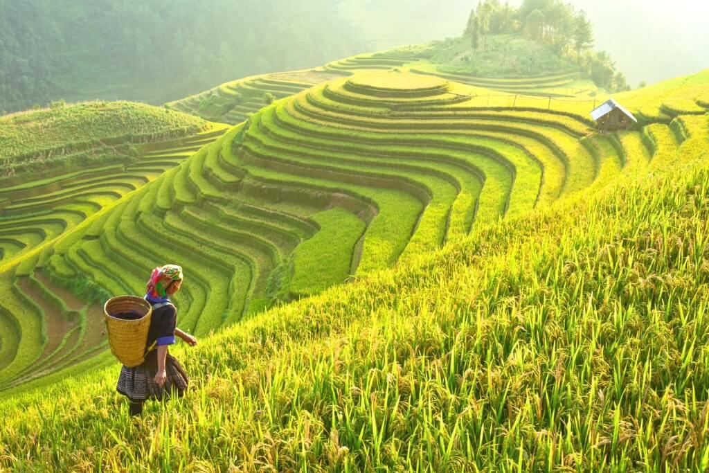 Sudeste asiático, Arrozales en Laos