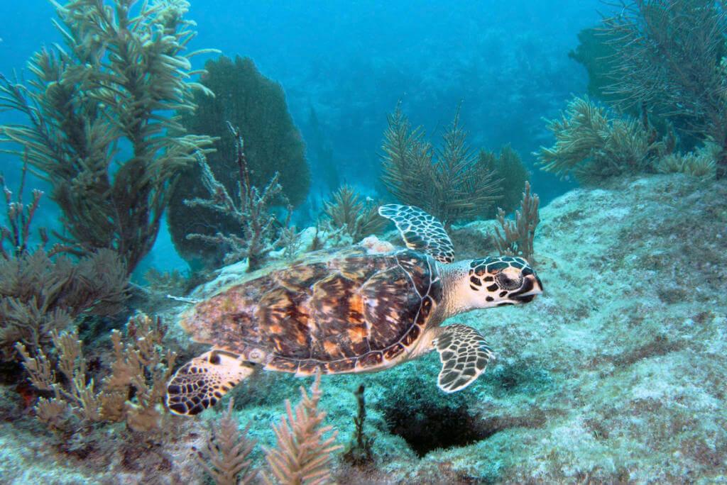 El mejor viaje a EEUU, Tortuga Cayos