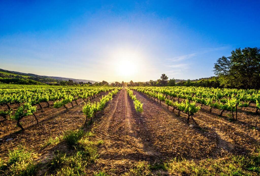 Viajar a La Rioja, Viña riojana