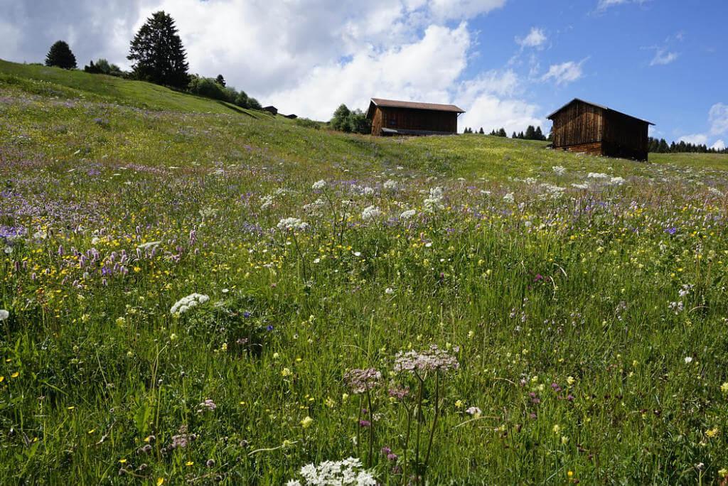 Viajar a Suiza, Prados Heidi