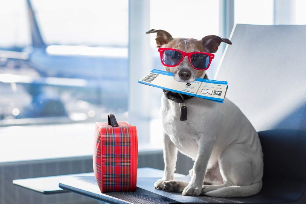 Viaje con perro