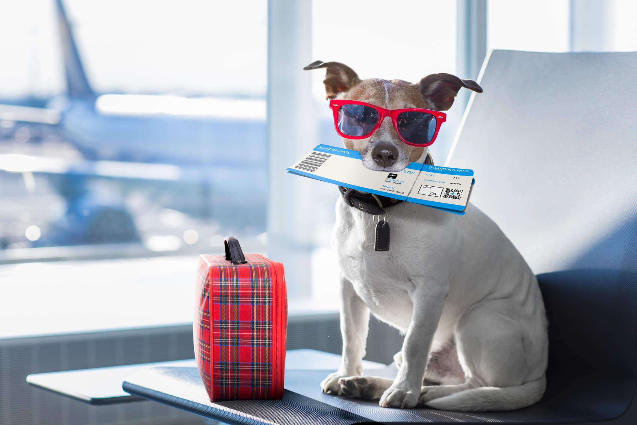 Viaje con perro 1